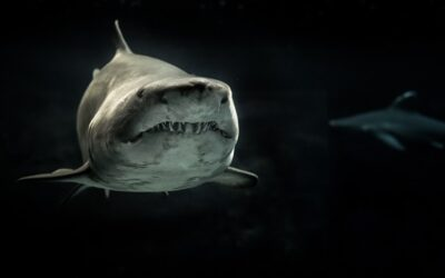 Shart Week: How Shark Week Crapped Its Pants, and What Marketers Can Learn From It